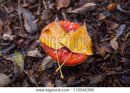 Santa's Shroom With Two Yellow Leafs On Top