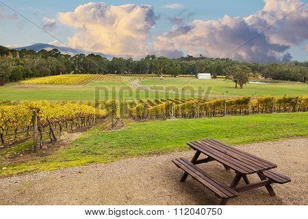 Beauriful Vineyard In Yarra Valley, Australia In Autumn