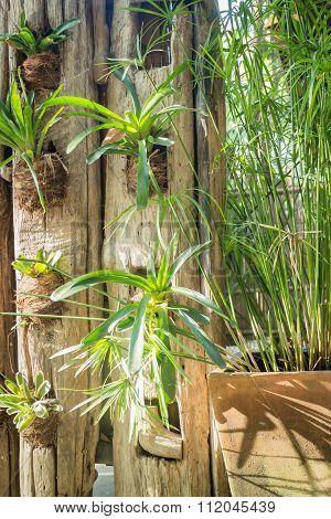 Minimal Green Plant In Garden