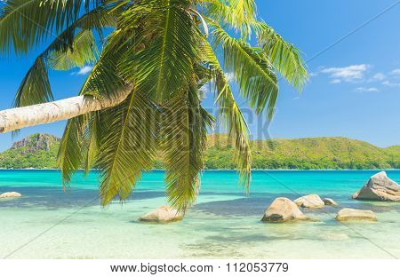 Beautiful beach Anse Boudin seen from under the coconut palm, Praslin island, Seychelles.