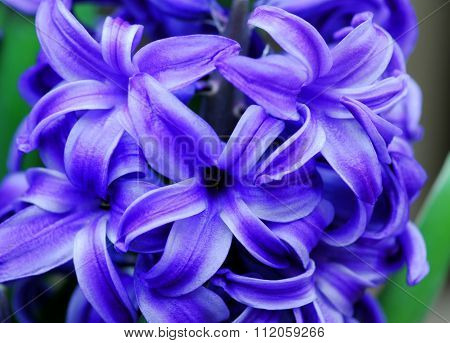 Blue Hyacinth Amethyst Flower
