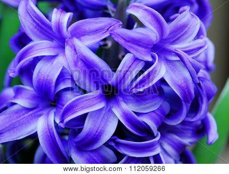 Blue Hyacinth Amethyst Flower