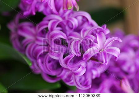 Pink Hyacinth Amethyst Flower