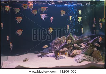 Aquarium Fishes