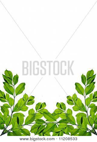 Green leaf frame isolated