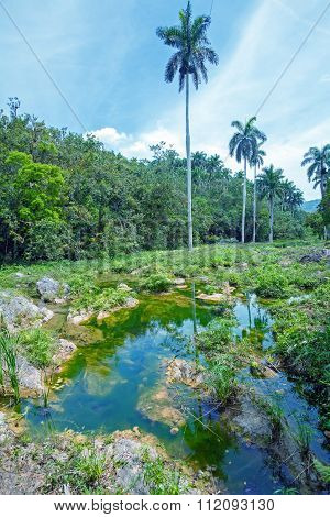 Landscape Of Topes De Collantes, Cuba