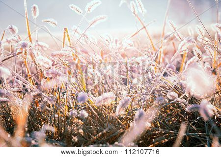 Frozen Graminaceous