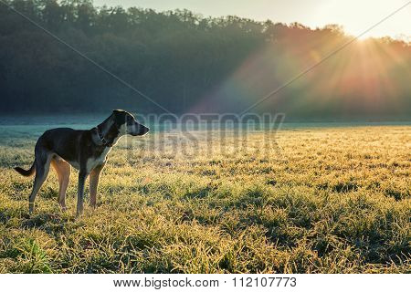 Dog And Winter Sun