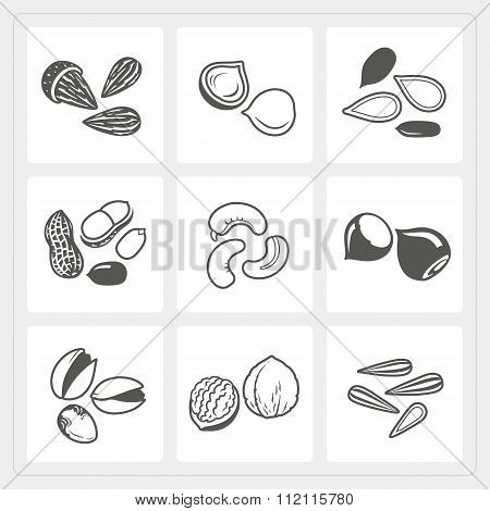 Nut Icons Set