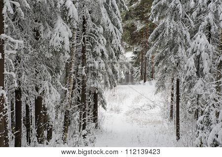 Path To The Lake.