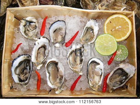 Box Of Fresh Oysters On Ice