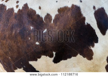 Selective Focus Real Brown And White Cow Hide
