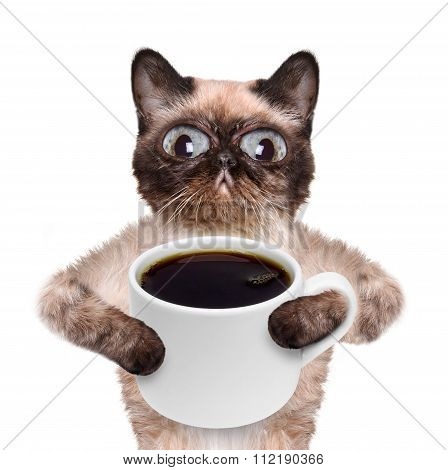 Cat with a cup of coffee.