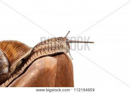 Snail On Rock Top