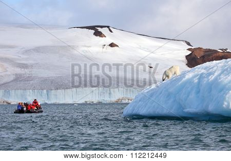 FRANZ JOSEF LAND, RUSSIAN FEDERATION - August 14, 2015: and group of tourists in inflatable Zodiac boat are watching polar bear on iceberg
