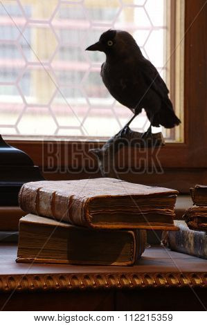 books historic still life bird taxidermy