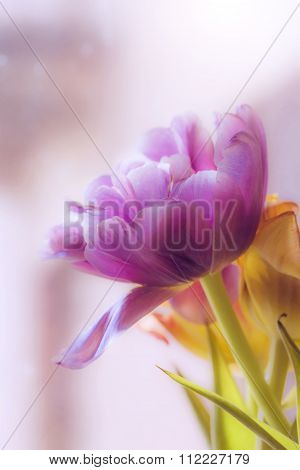 Tulip In Blur