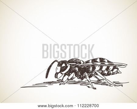 Sketch of wasp, Hand drawn illustration