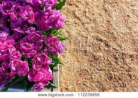 Raised Garden Tulip Beds