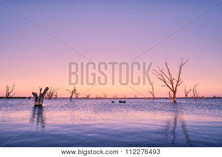 Dead trees in Lake Bonney, SA