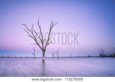 Dead Tree in Lake Bonney, South Australia