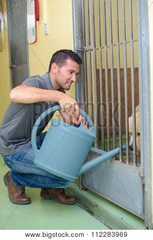 Man putting water into dog kennel with watering can