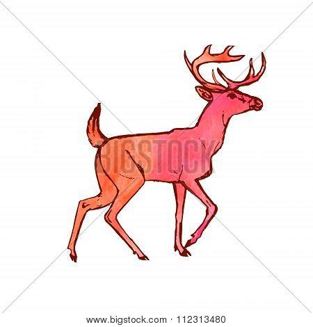 Deer (watercolor Paint Drawing)