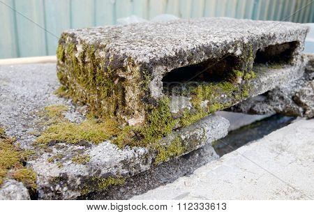 Mosse On The Brick