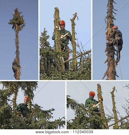 Treeworker In Action - Collage