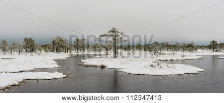 Bog landscape in winter