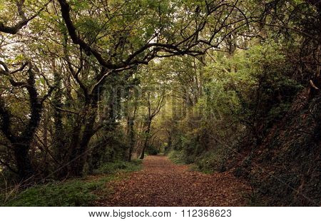 Mysterious pathway in the forest in the autumn.
