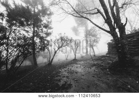 Forests at frontier Thai - Myanmar with hazy fog in winter, Black and white
