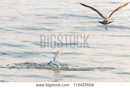 The seagull flies and looks at the bird
