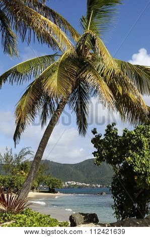 Landscape Of Sainte Luce In Martinique