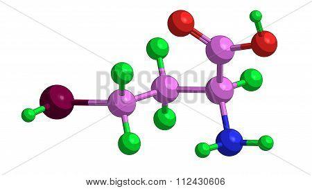 Molecular Structure Of Homocysteine