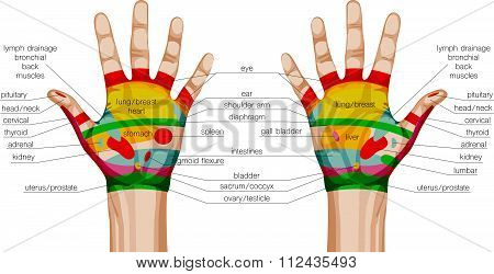 Acupuncture Hands Scheme.