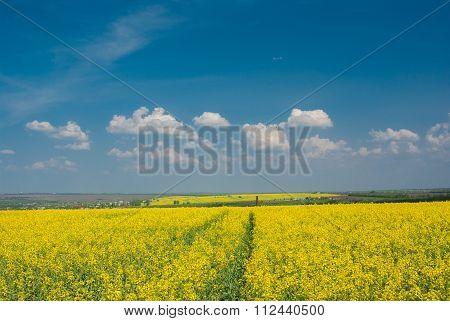 Landscape with flowering rape-seed field in central Ukraine