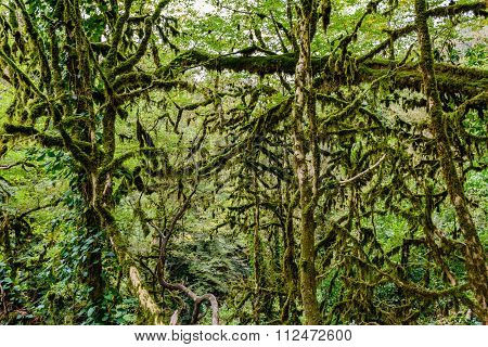 The yew-and-boxwood tree grove