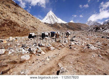 Caravan of Yaks, Nepal
