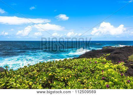 Succulent plants along Haleakala coast, Maui, Hawaii