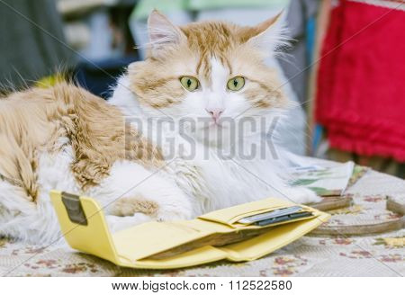 Cat And Purse