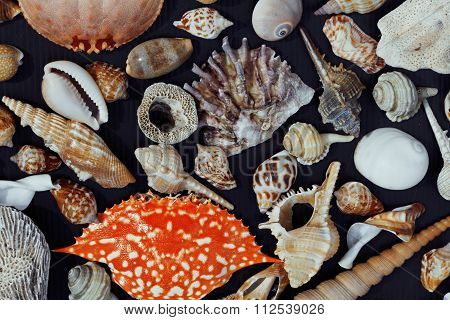 a lot of seashells on setout together with crab