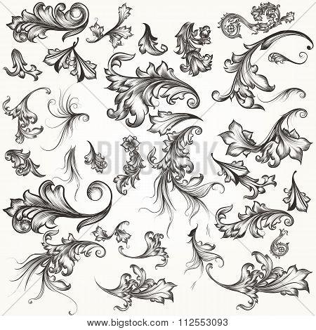 Vector Set Of Swirl Elements For Design. Calligraphic Vector