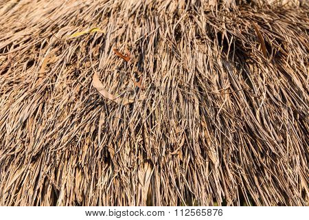 Closeup Of Old And Dry Grass Texture
