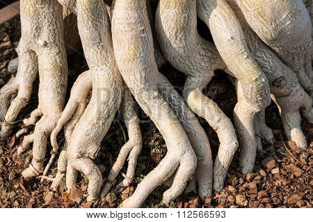 Closeup Of The Nature Tree Roots