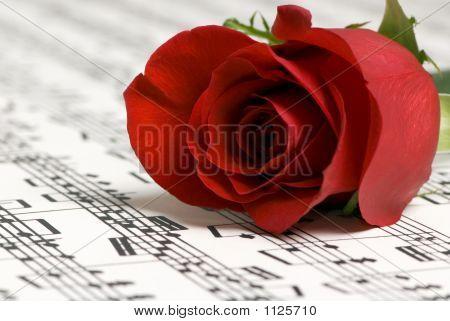 Rose Music 2