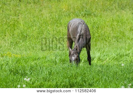 Horse having lunch in fresh spring grass