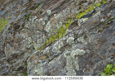 Natural Rocky Texture
