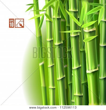 Bamboo Background. Vector Illustration, Eps10.