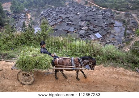 Horse Driven Carriage With Hay And Chinese Farmers.